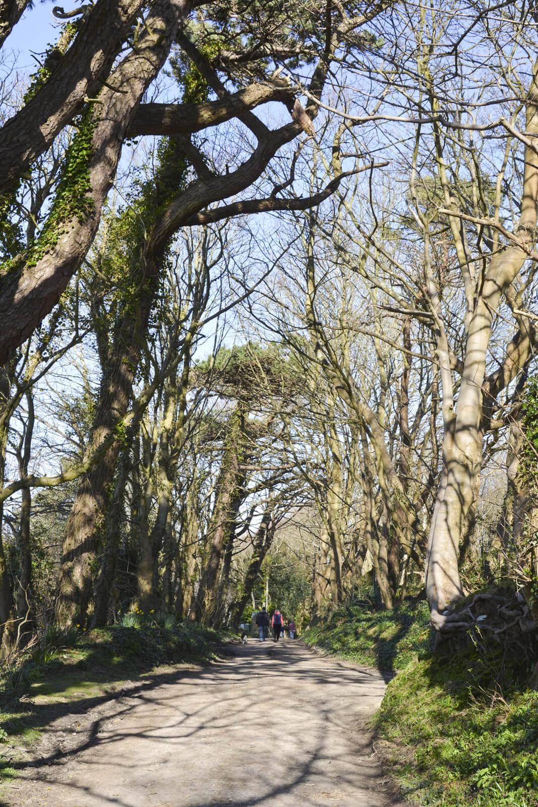 20150322 DSC_0617 Whitwell Ashknowle Lane Spring Family Walking
